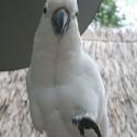 parrot_mountain-13