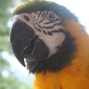parrot_mountain-16