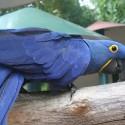 parrot_mountain-17