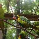 parrot_mountain-18