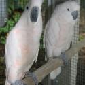 parrot_mountain-19
