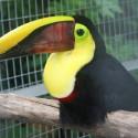 parrot_mountain-20