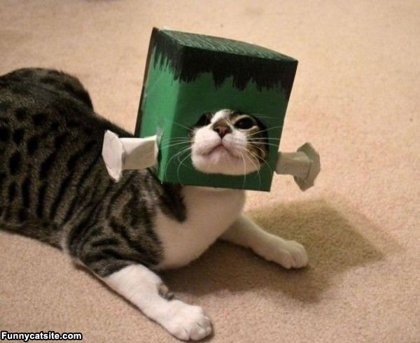 Is Dressing Up Cats Animal Cruelty