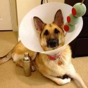 thumbs dog costume martini drink cone of shame