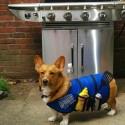 funny-pet-costumes-plumber