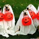 thumbs halloween pet wallpaper
