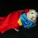 pet_costumes_001