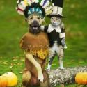 pet_costumes_005