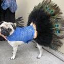 pet_costumes_012