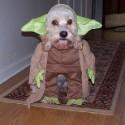 pet_costumes_017