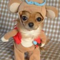 thumbs pet costumes 024