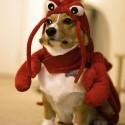 pet_costumes_031