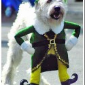 thumbs pet costumes 033