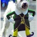 pet_costumes_033