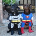 thumbs pet costumes 039