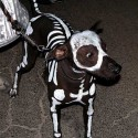 pet_costumes_040