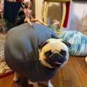 thumbs pets in costumes miley wrecking ball pug
