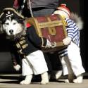 thumbs pirate dog