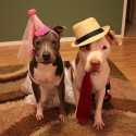pets-in-costumes-10