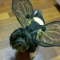 pets-in-costumes-12
