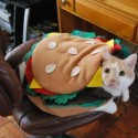 pets-in-costumes-14
