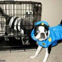 pets-in-costumes-15