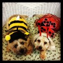 pets-in-costumes-16