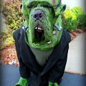 pets-in-costumes-18