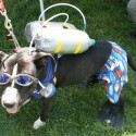 pets-in-costumes-19