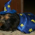 pets-in-costumes-2