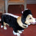 pets-in-costumes-20