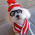 pets-in-costumes-21
