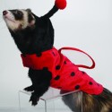 pets-in-costumes-23