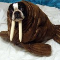 pets-in-costumes-24