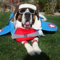 pets-in-costumes-25