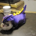pets-in-costumes-28