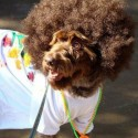 pets-in-costumes-29