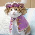 pets-in-costumes-32
