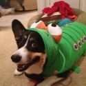 pets-in-costumes-33