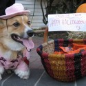 pets-in-costumes-35