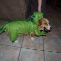 pets-in-costumes-36