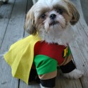 pets-in-costumes-4