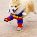 pets-in-costumes-40
