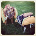 pets-in-costumes-45