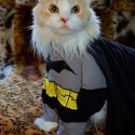 pets-in-costumes-47