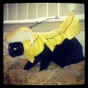 pets-in-costumes-48
