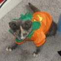 pets-in-costumes-49