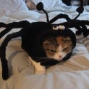 pets-in-costumes-50