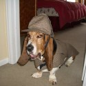 pets-in-costumes-51