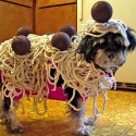 pets-in-costumes-52